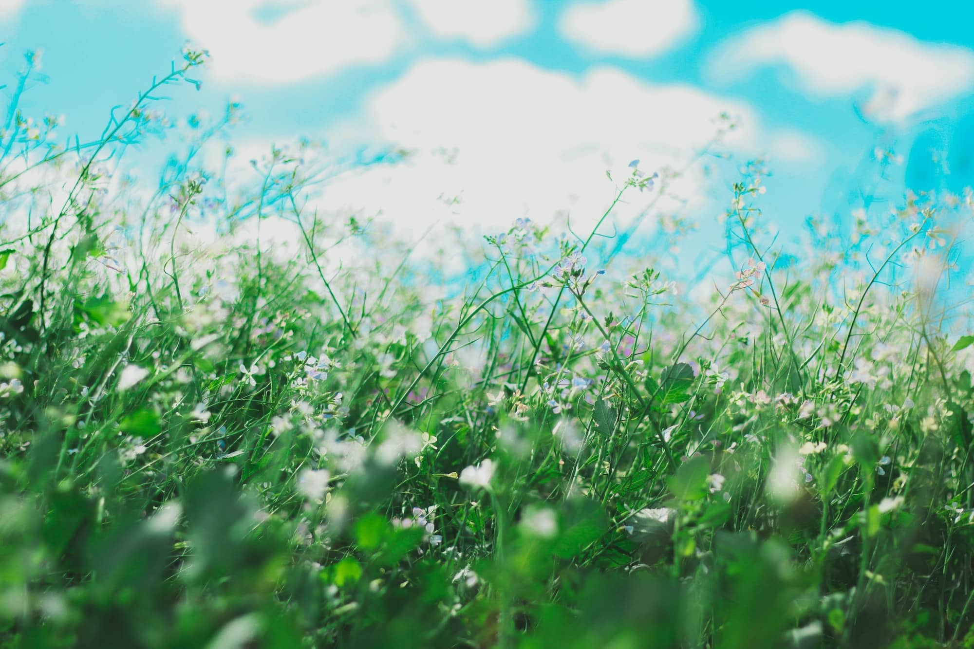 seasonal allergies - flowers in a field - high pollen count